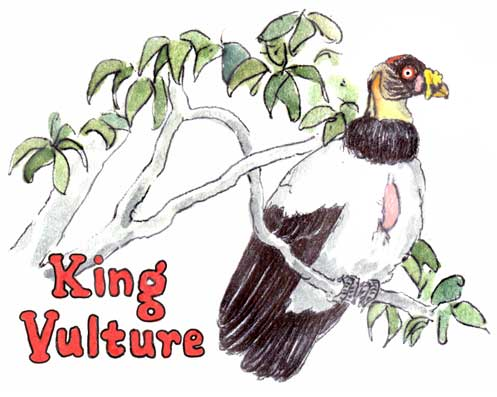 Watch out for King Vultures...