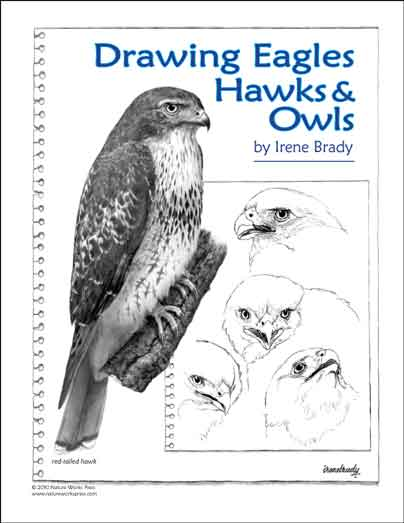 How to Draw Eagles, Hawks & Owls...