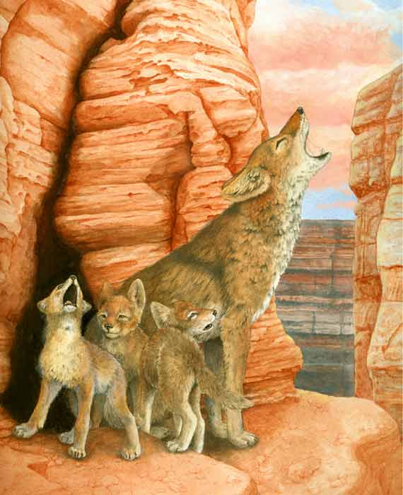 Howling Coyote Family